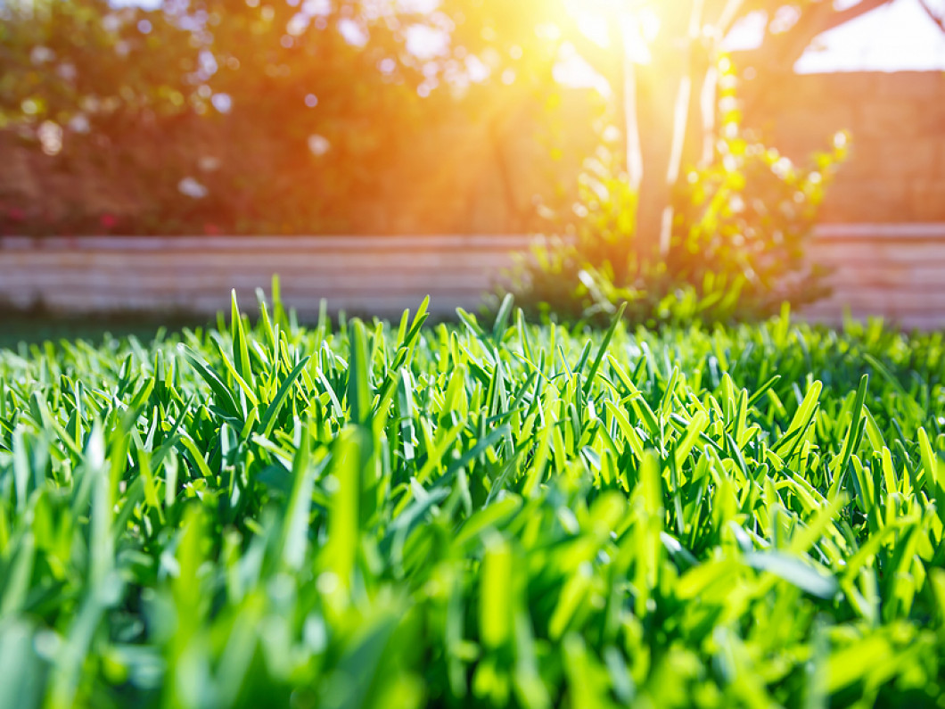 New Jersey Lawn Care News