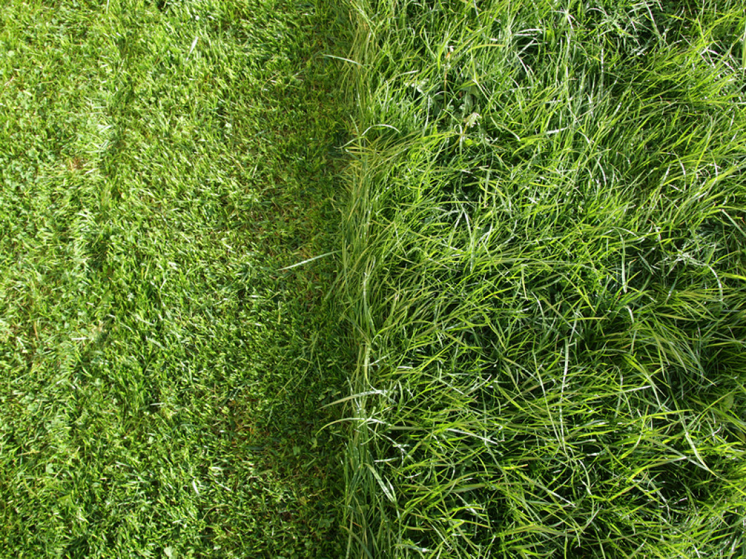 The Grass Is Always Greener With Extreme Green