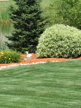 Lawn Aeration & Seeding